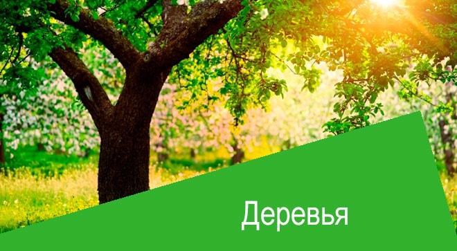 Актара для деревьев