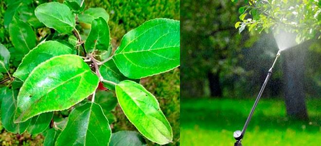 Актара для плодовых деревьев