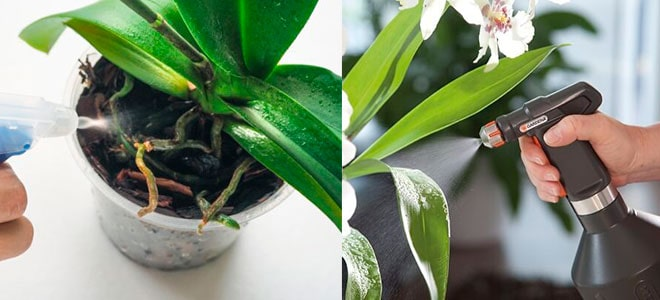 Обработка орхидей
